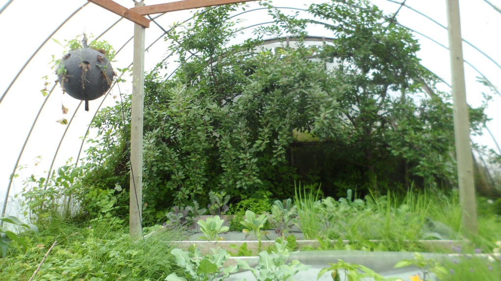 one of clem's greenhouses